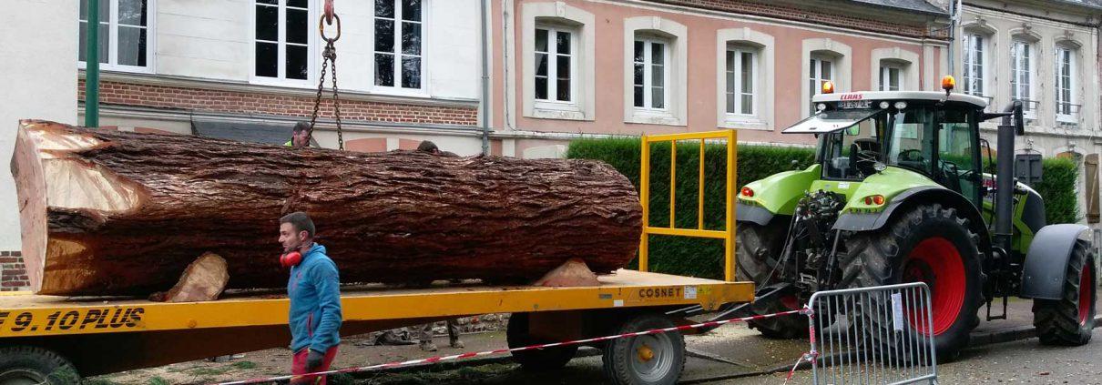Enlèvement du tronc du séquoia