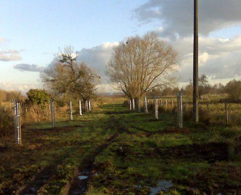 Un bon paysagiste est toutterrain : plantation d'arbre dans un marais
