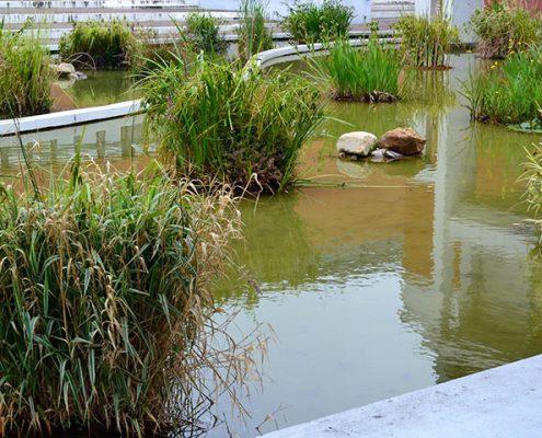 Entretien de plantes aquatiques dans un bassin au Havre