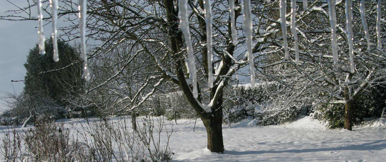 Elagage en Normandie : préférer l'hiver
