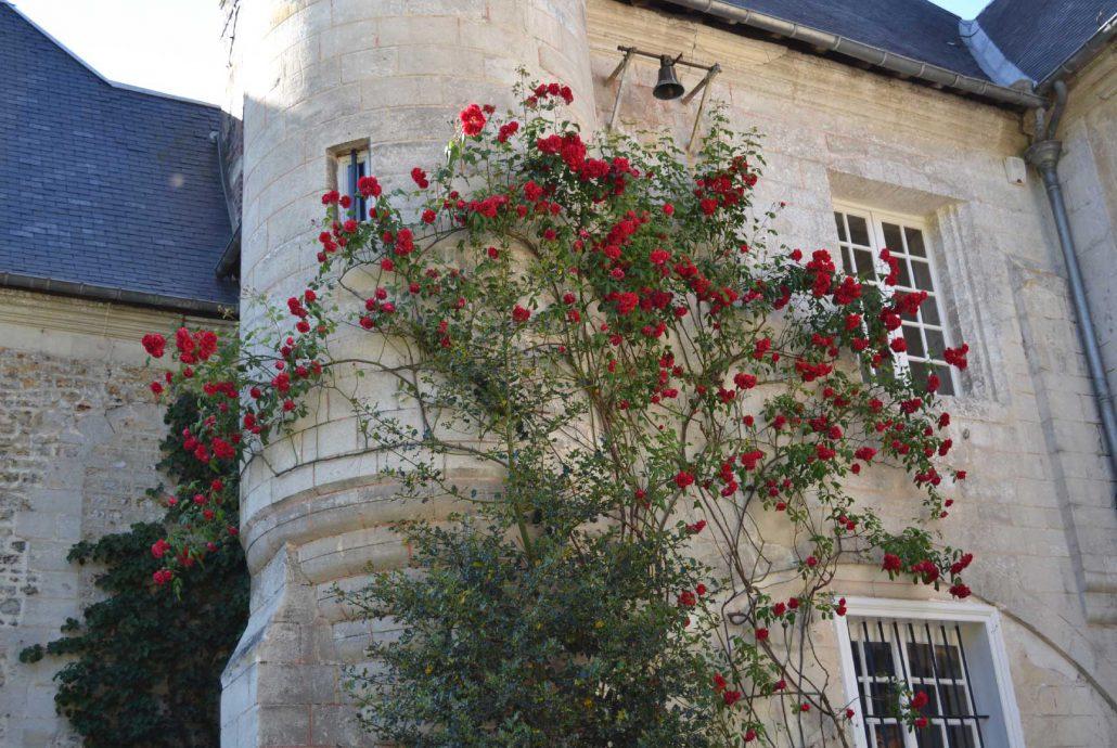 Plantation et taille des rosiers soci t normande du paysage - Taille rosier grimpant ...